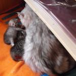 Katzen Nachwuchs